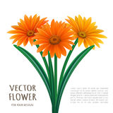 Hand drawn vector realistic illustration of Gerbera Daisy flower Royalty Free Stock Images