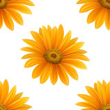 Hand drawn vector realistic seamless pattern of Gerbera Daisy flower Stock Images