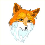 A hand drawn vector of a red fox`s head Stock Images