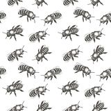 Seamless pattern with bees. Hand drawn vector illustration. Hand drawn vector seamless pattern with bees vector illustration