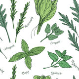 Hand drawn vector. Seamless pattern with herbs and spices. Stock Image
