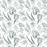 Hand drawn vector. Seamless pattern with herbs and spices. Royalty Free Stock Photos