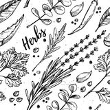 Hand drawn vector. Seamless pattern with herbs and spices. Stock Photo