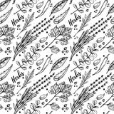 Hand drawn vector. Seamless pattern with herbs and spices. Hand drawn vector. Seamless pattern with herbs and spices Royalty Free Stock Photo