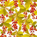 Hand drawn vector seamless pattern with red ripe barberry twigs on a white background. Beautiful floral design elements Stock Photo