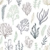 Hand drawn vector seamless patterns. Seaweed. Background with he vector illustration