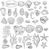 Hand drawn vector seashells Royalty Free Stock Photography