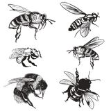 Hand drawn vector set of bees, bumblebee, high detailed insects for design stock images