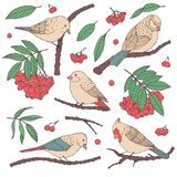 Hand drawn vector set of birds, branches, leaves and rowanberry in pastel colors isolated on white background. vector illustration