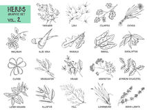 Hand drawn vector set of herbs and spices vintage stock illustration