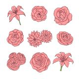 Hand drawn vector set of pink rose, lily, peony and chrysanthemum flowers contour stock illustration