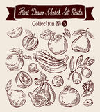 Hand drawn vector sketch collection fruit Stock Image