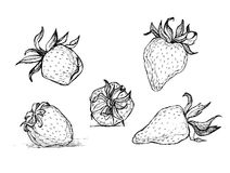 Hand drawn vector strawberry set. Black and white illustration of strawberries Stock Photo
