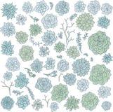 Hand drawn vector succulentes Royalty Free Stock Photos