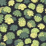 Hand drawn vector succulents seamless pattern in green and yellow colors on black background. Floral design. Colorful hand drawn vector succulents seamless Royalty Free Stock Photography
