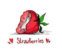 Hand drawn vector sweet strawberry. Color illustration of strawberry with text Stock Photos