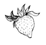 Hand drawn vector sweet strawberry. Line art. Illustration of strawberry .Sketch. Black and white Royalty Free Stock Photos
