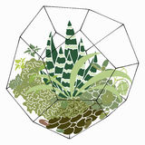 Hand drawn vector terrarium and succulent. Plants isolated on white background Royalty Free Stock Photo