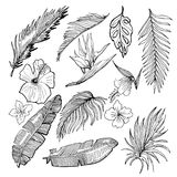Hand Drawn Vector Tropical Set. Banana And Palm Leaves And Tropi. Cal Flowers.  Contour Drawing. Black And White Illustration Royalty Free Stock Photography
