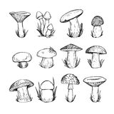 Hand drawn vector vintage illustration - Mushrooms. Royalty Free Stock Images