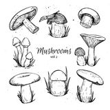 Hand drawn vector vintage illustration - Mushrooms. Royalty Free Stock Image