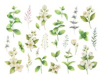 Hand drawn vector watercolor set of herbs and spices. Hand drawn vector watercolor set green herbs and spices. Floral background for design of natural food Royalty Free Stock Photos