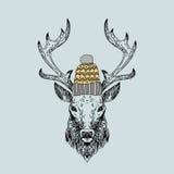 Hand drawn vector wild deer. Royalty Free Stock Photos