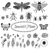 Hand drawn vector zentangle black plant leaves Royalty Free Stock Photography
