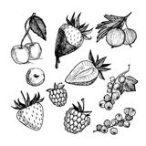 hand-drawn vectorillustratie Inzameling van bessen Geïsoleerde Stock Afbeeldingen