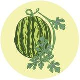 Hand-drawn vectorillustratie van een watermeloen met een takje en l Royalty-vrije Stock Fotografie