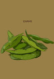 Hand drawn vegetable - edamame/soy beans. Royalty Free Stock Images