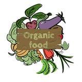 Hand drawn vegetable icon. Vector illustration. Hand drawn sketch watercolor vegetable icon with text on vintage board. Organic healthy food vector illustration Stock Image