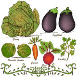 Hand drawn vegetable set 2 Stock Photo