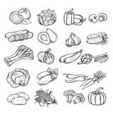 Hand drawn vegetable. Vector set of different hand drawn vegetable , black line isolation Stock Photography