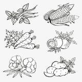 Hand drawn vegetables Stock Photos