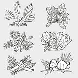 Hand drawn vegetables Stock Images