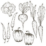 Hand drawn vegetables icon set sketch in black lines.  Stock Photography