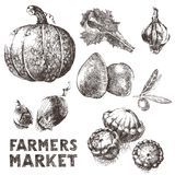 Hand drawn vegetables Royalty Free Stock Images