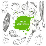 Hand Drawn Vegetables Royalty Free Stock Image