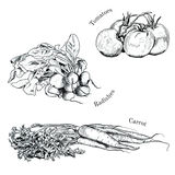 Hand drawn vegetables ink sketches set. Isolated carrot, raddish, tomatoes Stock Photo