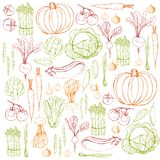 Hand drawn vegetables. Vector background. Hand drawn vegetables.Line drawing of colored vegetables on white backgroundn Vector background Royalty Free Illustration