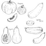 Hand drawn vegetables Stock Photo