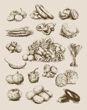 Hand Drawn Vegetables Set Royalty Free Stock Image