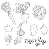 Hand Drawn Vegetables Set. Collection of food sketch. Vector illustration. Black and white linear image vector illustration