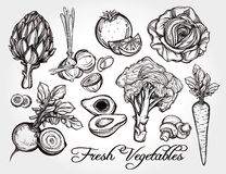 Hand drawn vegetables set. Stock Image