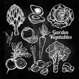 Hand drawn vegetables set. Royalty Free Stock Images