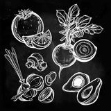 Hand drawn vegetables set. Stock Photo