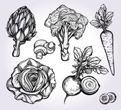 Hand drawn vegetables set. Royalty Free Stock Photos