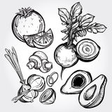 Hand drawn vegetables set. Garden vegetables set vintage linear style.  vector illustration. Hand drawn retro symbols of assorted veges. Perfect menu, garden Stock Photos