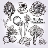 Hand drawn vegetables set. Stock Images